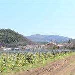 障がい者就労支援B型 のむらダイムの皆様といっしょにブドウ栽培しています。